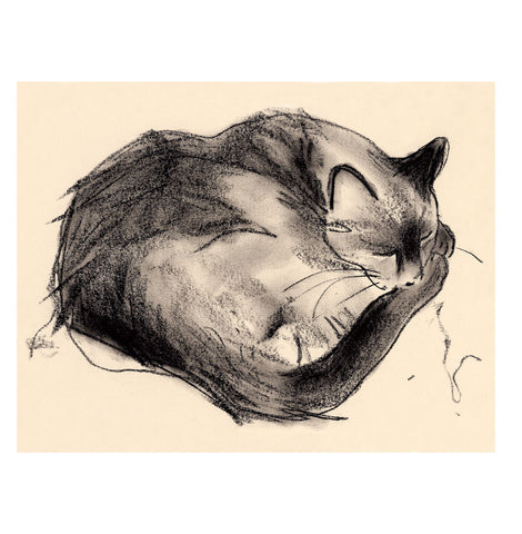 sleeping cat - card