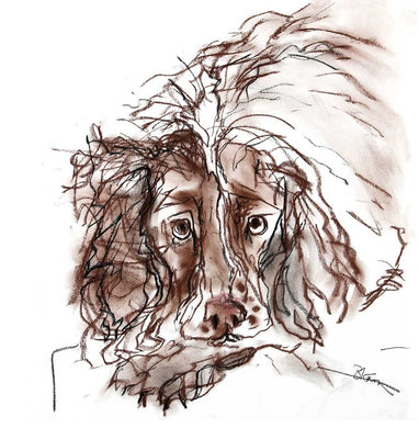 still waiting, springer spaniel - card
