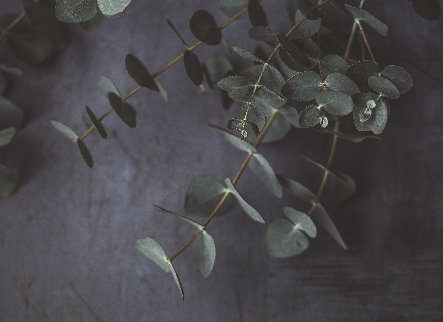 /de/blogs/magazine/scents-of-sleep-eucalyptus