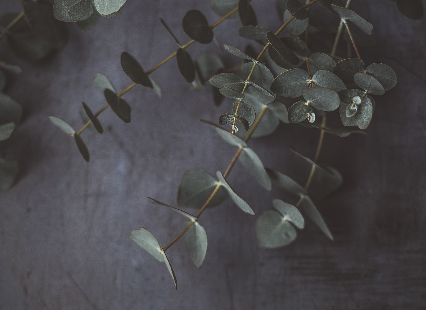 Scents to fall asleep to: Eucalyptus