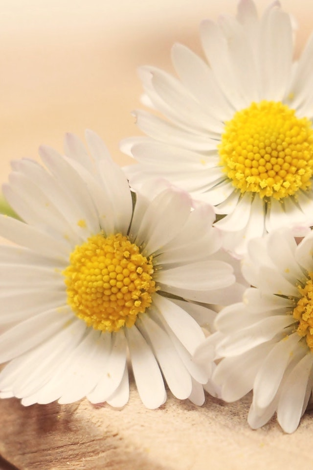 scents-of-sleep-chamomile