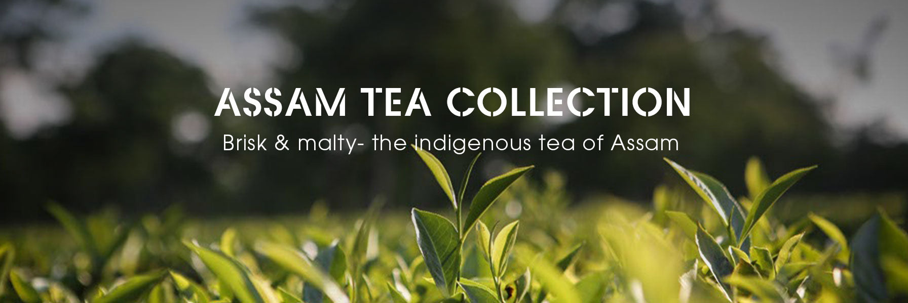 Assam Tea Estates