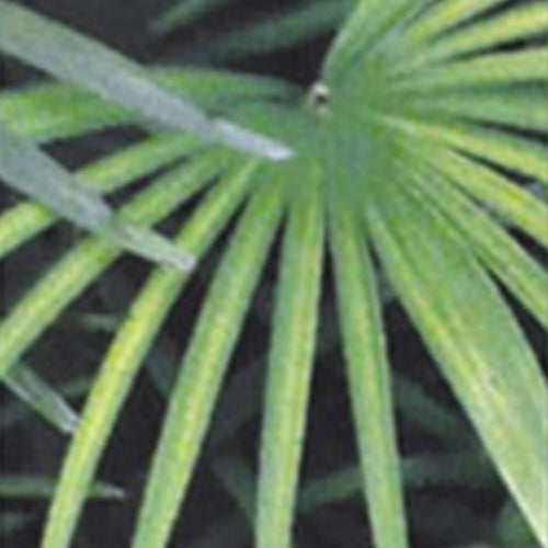 collections/palm-breeze-label.jpg