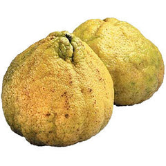 UGLI FRUIT FROM JAMAICA