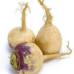 RUTABAGA FROM CANADA