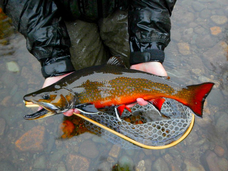All points fly shop outfitter news tagged fall for Maine trout fishing