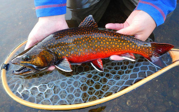 The Seasons Of Fly Fishing