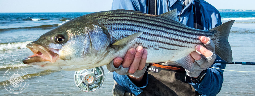 5 Tips For Early Season Striped Bass