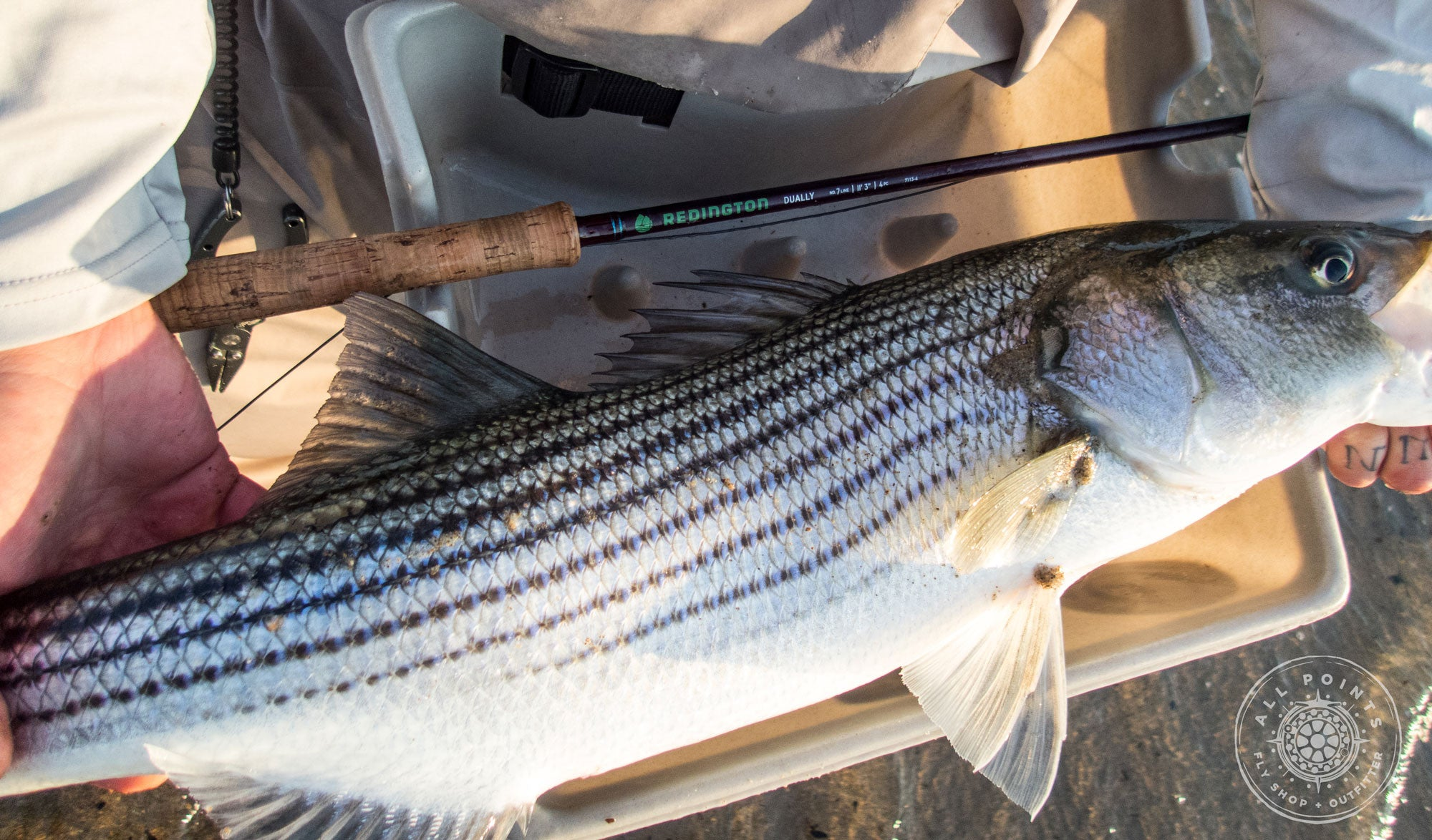 Redington Dually Switch Rod Review:  Using Two Handed Fly Rods For Striped Bass