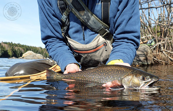 Maine Fly Fishing Trips - Guided