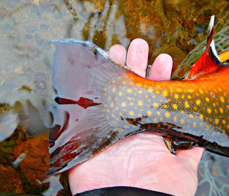 Fly Fishing For Brook Trout In Maine
