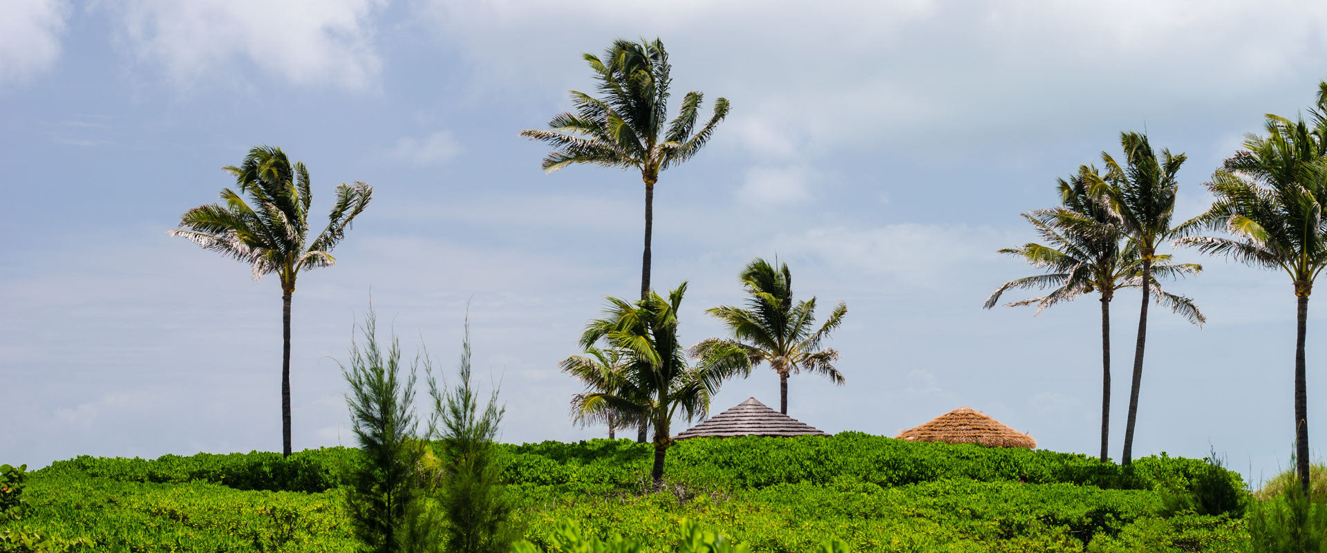 Palm Trees and Hut LookLagoon Lifestyle