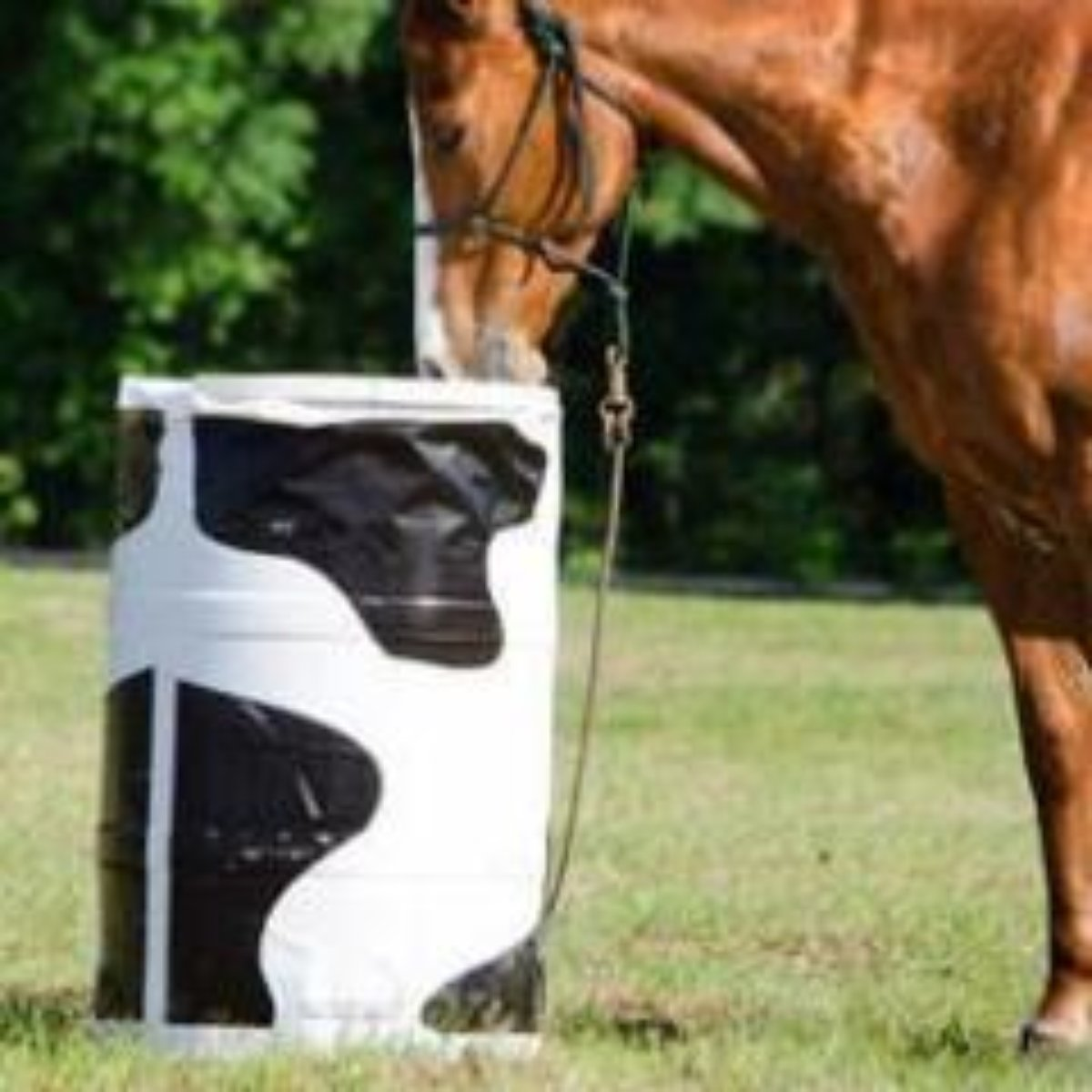 Cow Flavored Barrel Cover
