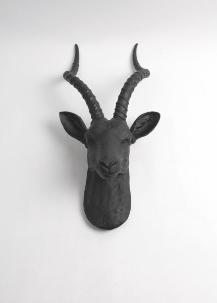 The Franny in Black | XL Antelope Head Wall Mount | Gazelle Faux Taxidermy | Black Resin
