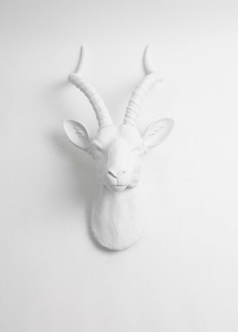 The Franny in White | XL Antelope Head Wall Mount | Gazelle Faux Taxidermy | White Resin