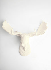 "Antique White Faux Moose Head Wall Mount, 18.5"" tall, 24.25"" wide"