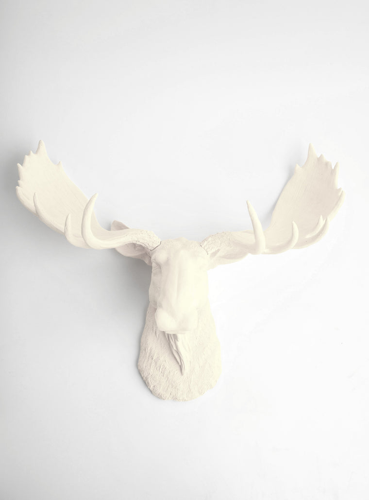 The Oddley | Moose Head | Faux Taxidermy | Antique White Resin