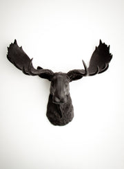 Black Moose Head Wall Mount, The Leonard