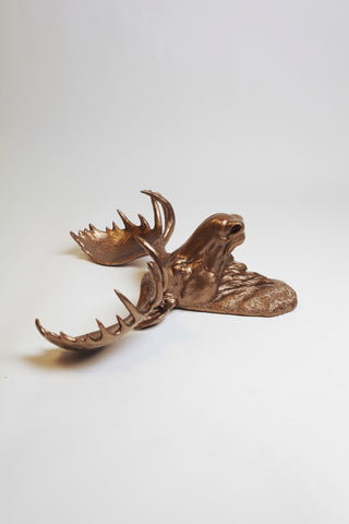 The Cola | Moose Head | Faux Taxidermy | Bronze Resin