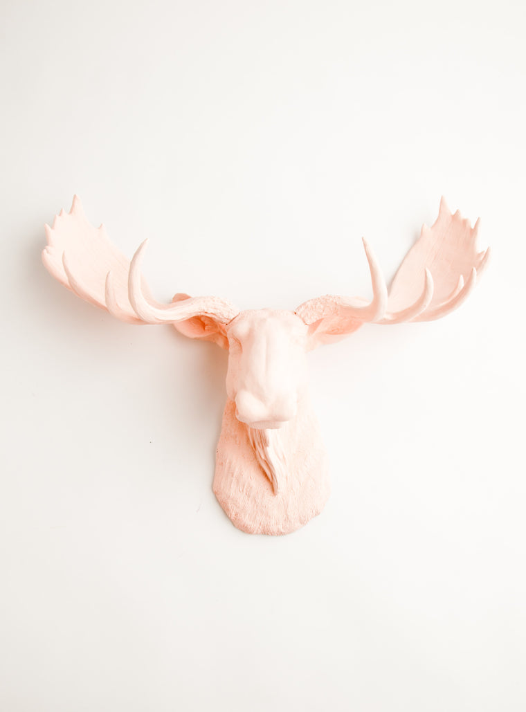 The Lillian | Moose Head | Faux Taxidermy | Cameo Pink Resin