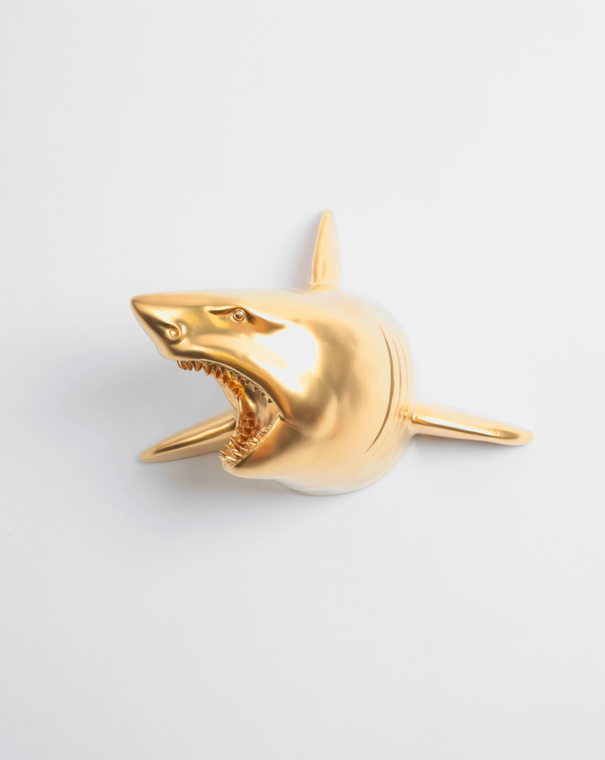 The Lewie in Gold | Faux Taxidermy Shark Head