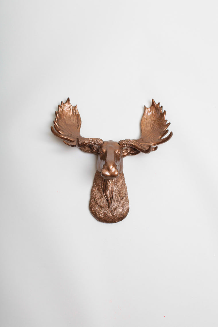 The MINI Cola | Moose Head | Faux Taxidermy | Bronze Resin