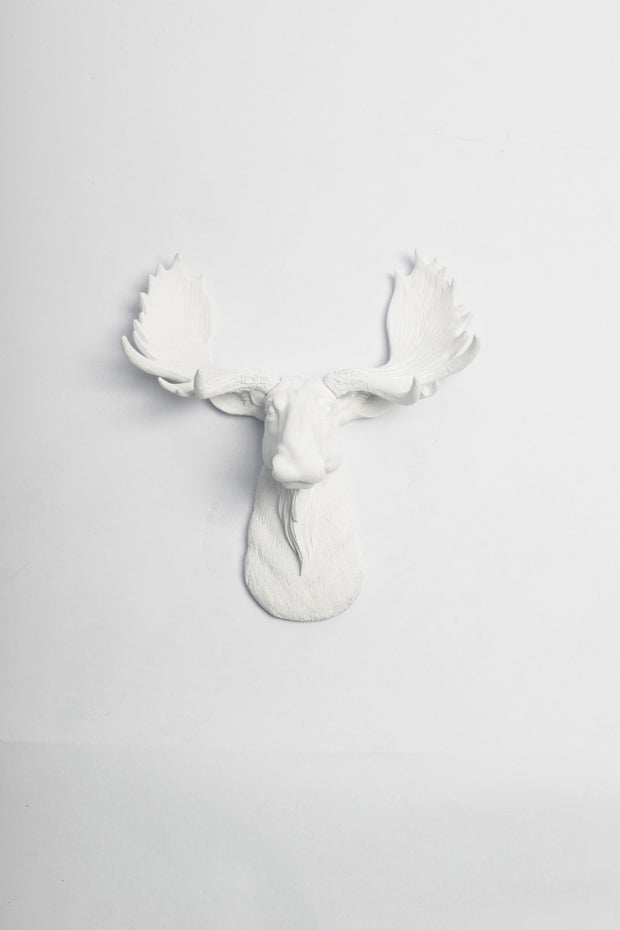 Mini White Moose Head, The Mini Edmonton