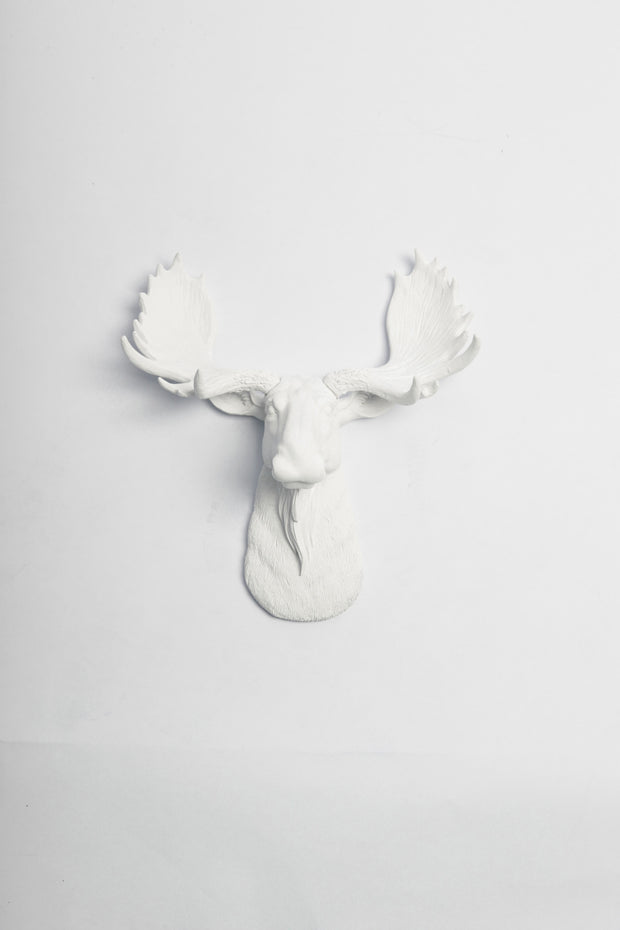 Mini White Moose Head Wall Mount, The Mini Edmonton