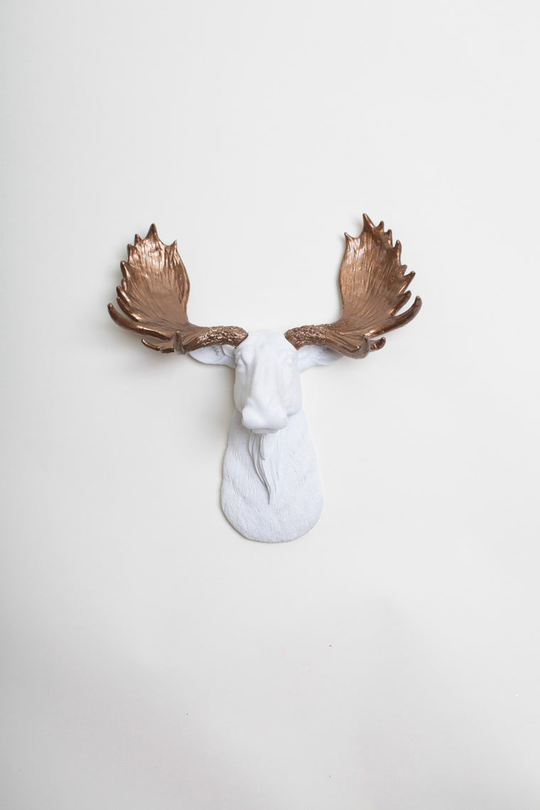 The MINI Boston | Moose Head | Faux Taxidermy | White Resin w/Bronze Antlers