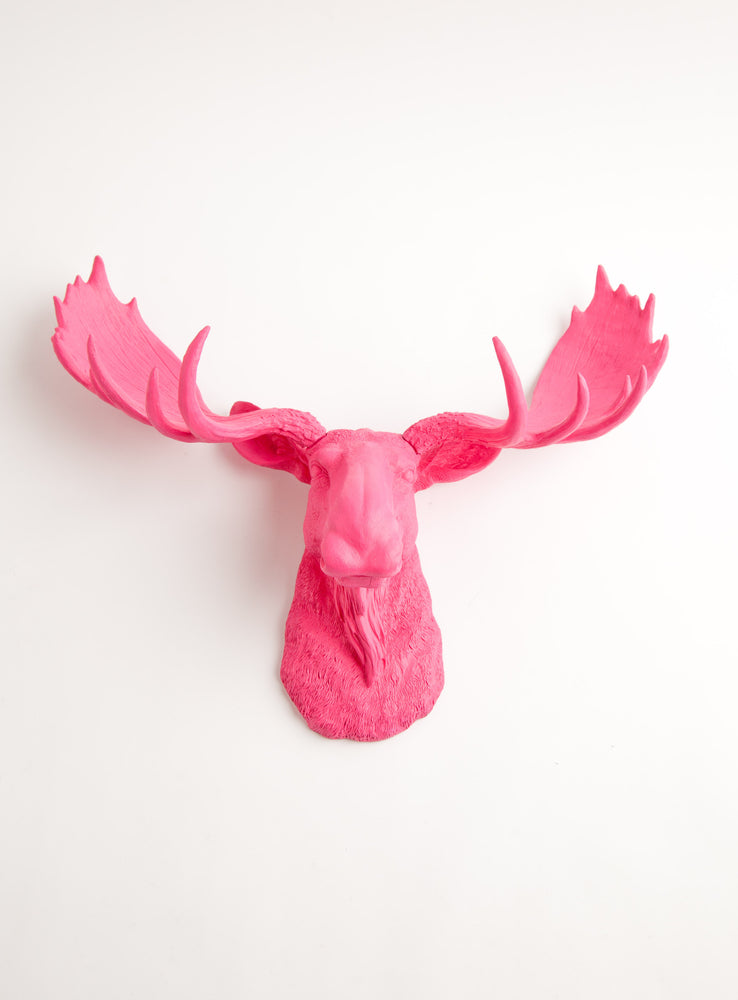 "18.5"" tall pink faux moose head wall mount, The Phillipa"