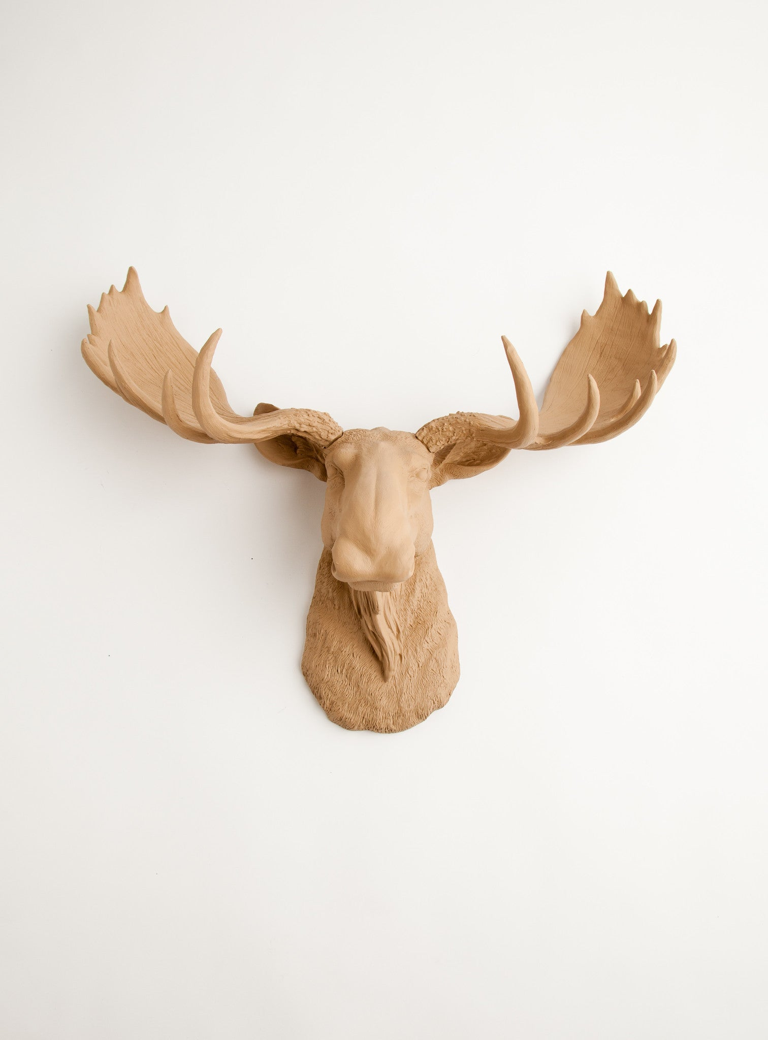 Tan moose head wall mount