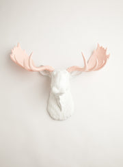 The Anita | Moose Head | Faux Taxidermy | White Resin W/Cameo Pink Antlers