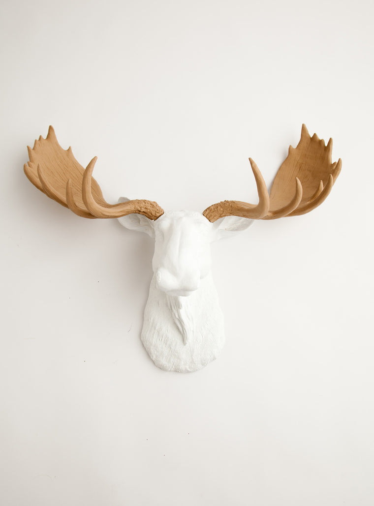 The Adolpho | Moose Head | Faux Taxidermy | White Resin W/Tan Antlers