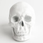 The Fitz in White | Trendy Victorian Gothic Human Skull Art