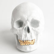 The Fitz in White with Gold Teeth | Trendy Victorian Gothic Human Skull Art