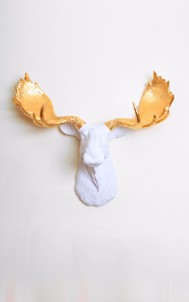 White & Gold Moose Head Wall Mount. Gold Resin Moose Antlers with a white head.