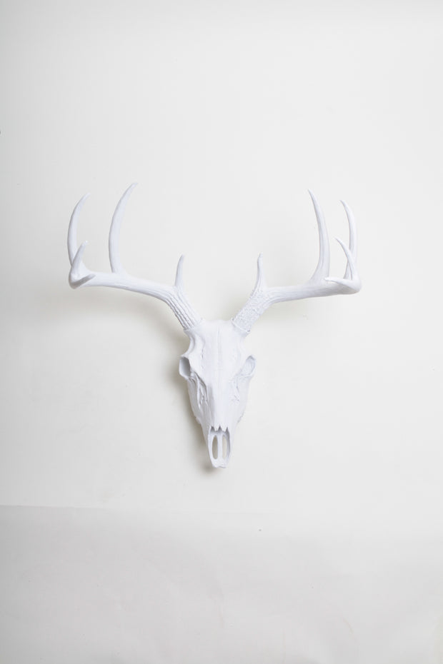White deer skull wall mount