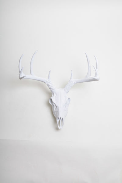 White Deer Skull Wall Mount 21 Quot Tall 19 5 Quot Wide White