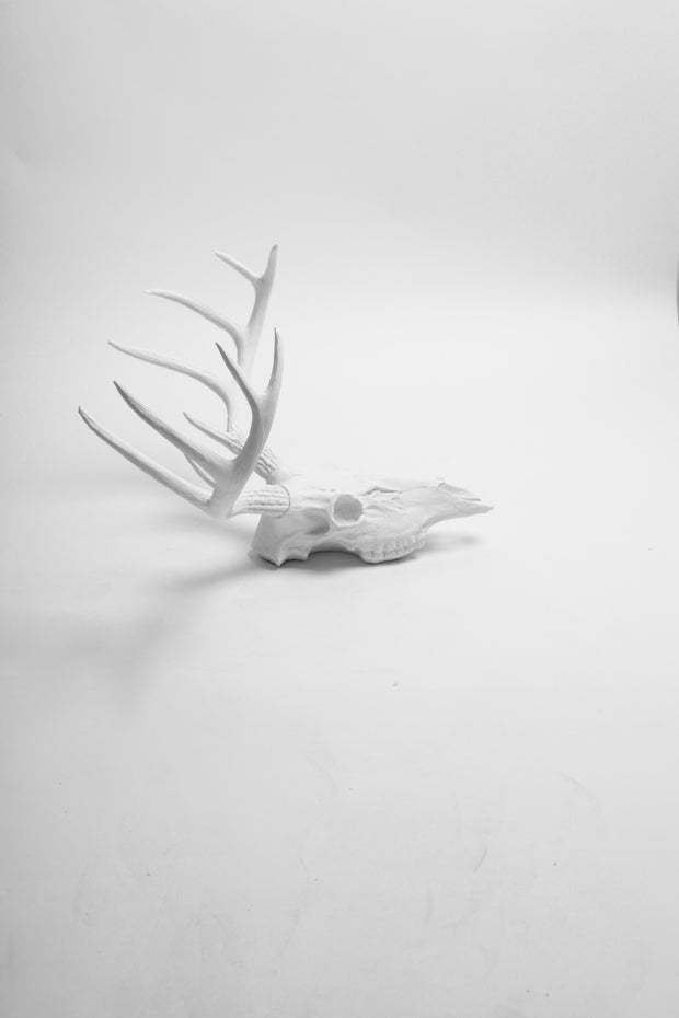 White Faux Deer Skull | Stag Skeleton | White Resin