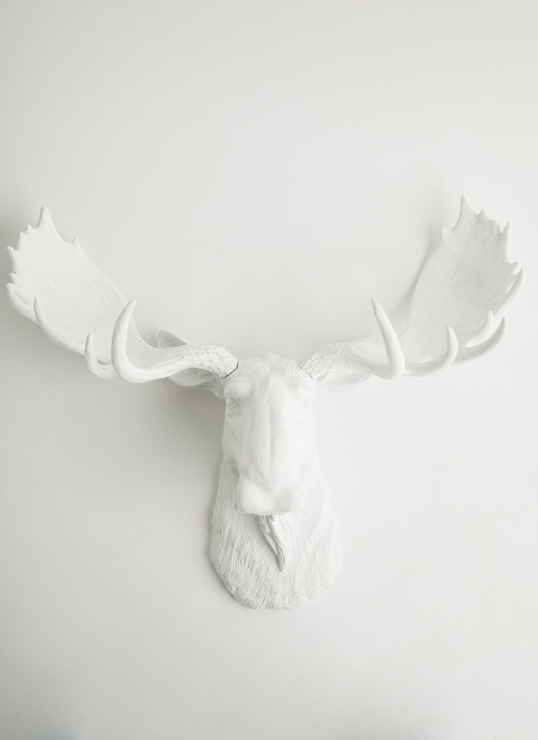 The Edmonton, Large White Faux Moose Head Wall Mount