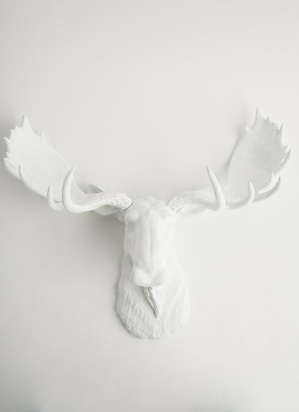 White Faux Moose Head Wall Sculpture