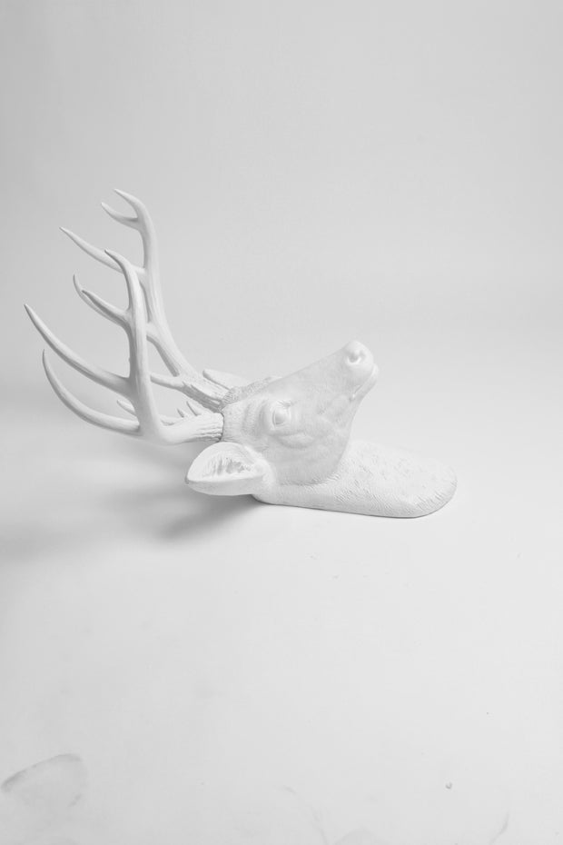 White Deer Head Decor, Side view of resin XL Templeton Deer Head