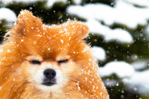 Top winter safety tips for pets By Nicole Forsyth