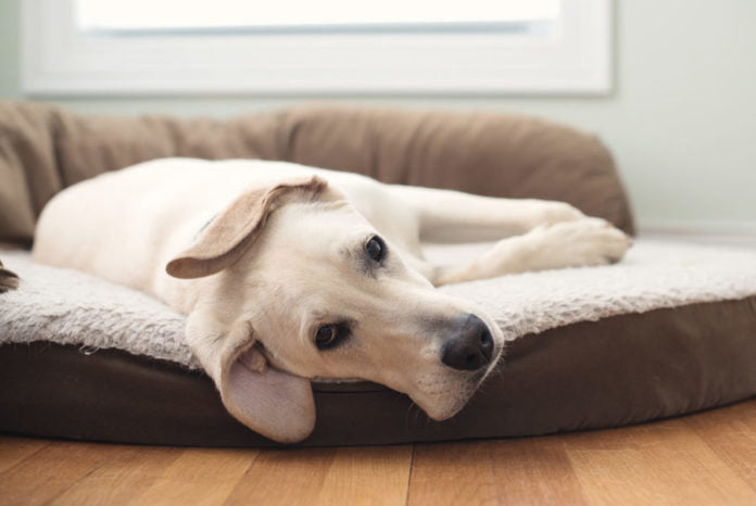 How to train your dog to sleep in his bed