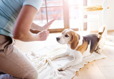 7 Fun Things to Do with Your Dog When You're Stuck Indoors