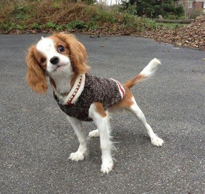 Boyfriend Dog Sweater