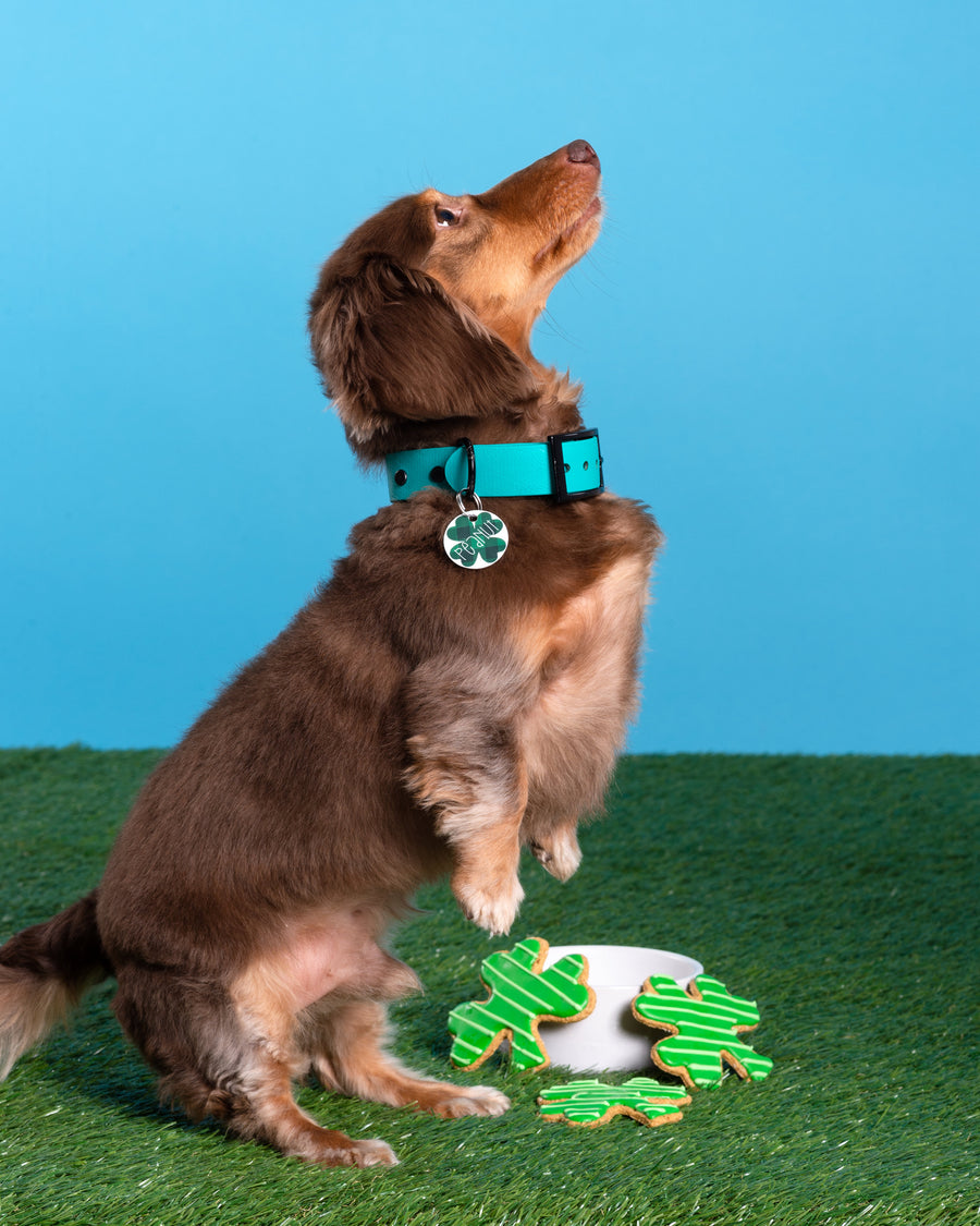 St. Patrick's Day Shamrock ID Tag - The Dapper Paw