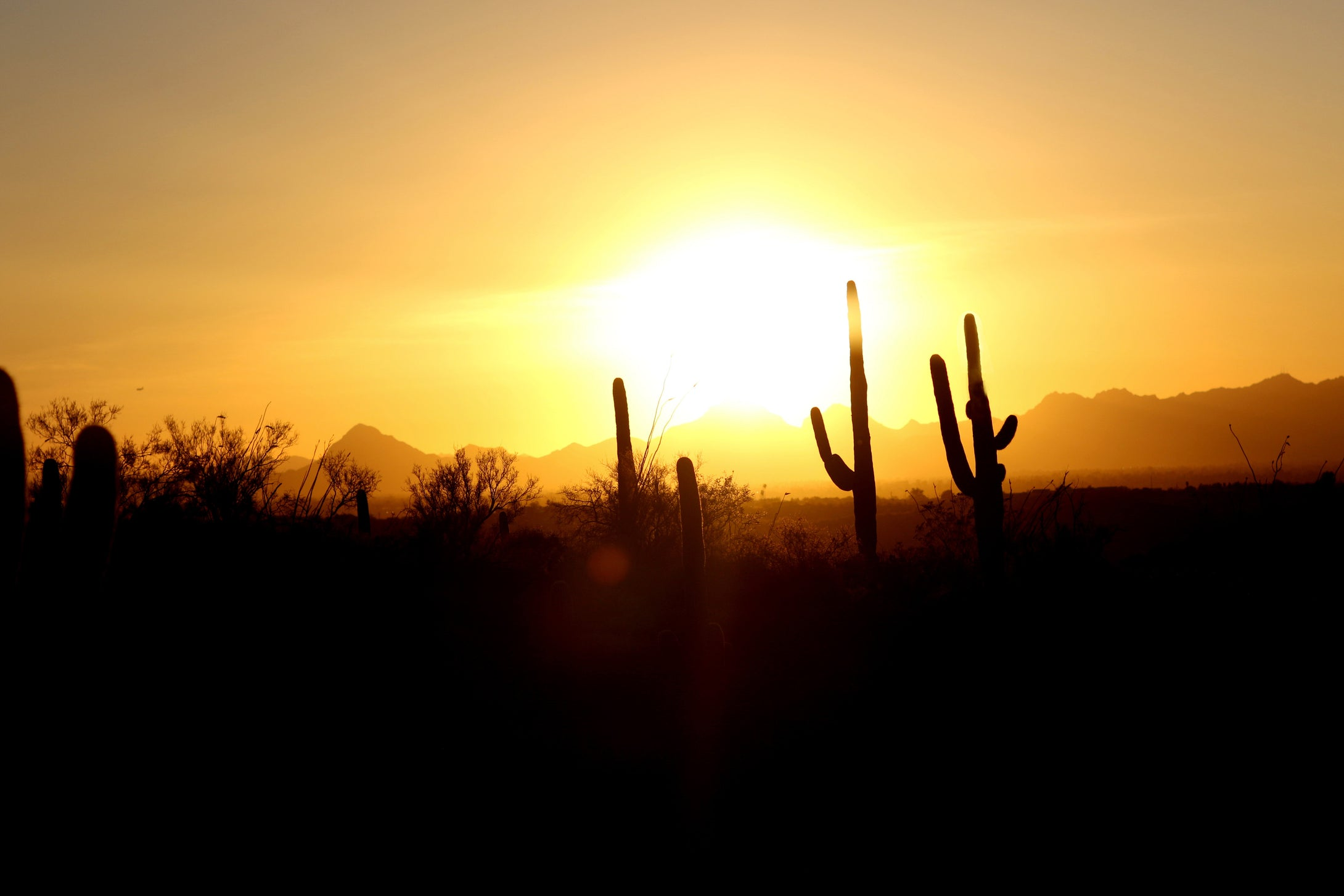 The Cactus Sunset
