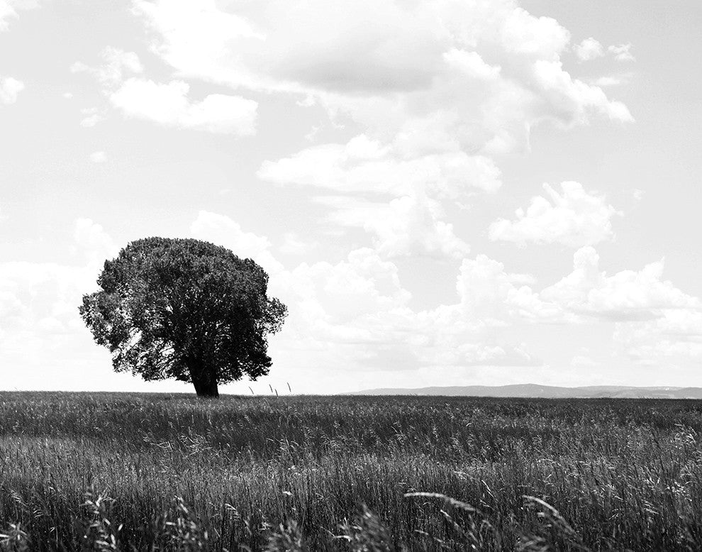 Cottonwood on the Plains