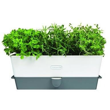 Self Watering Triple Herb Keeper Kitchen Tools Default Title Cole & Mason